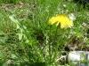 1c_primavera_longhena_2011012011