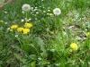 1c_primavera_longhena_2011032011