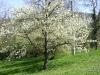 1c_primavera_longhena_2011042011