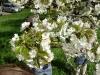 1c_primavera_longhena_2011062011
