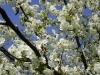 1c_primavera_longhena_2011072011