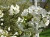 1c_primavera_longhena_2011092011