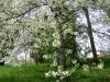 1c_primavera_longhena_2011112011