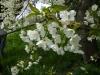 1c_primavera_longhena_2011122011