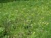 1c_primavera_longhena_2011132011