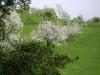 1c_primavera_longhena_2011142011