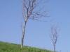 2c_pausa_primavera_2011052011