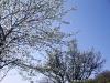 2c_pausa_primavera_2011082011