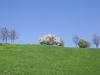 2c_pausa_primavera_2011142011