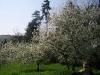 2c_pausa_primavera_2011182011