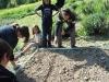 insalata_5b_082011